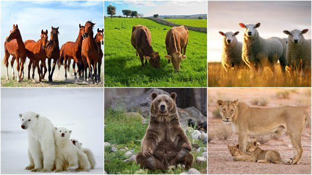 Colección de varias criaturas terrestres