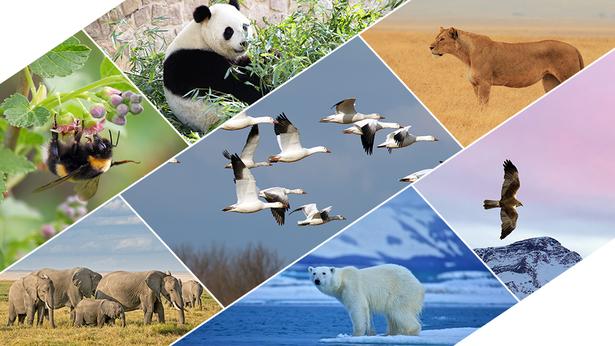 hay varios animales, panda, leona, elefante y oso polar viven en la tierra. águila,, ánsar y abeja vuelan en el cielo