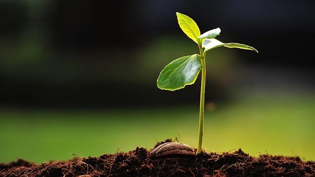 una semilla fresca que crece fuera del suelo con hojas verdes