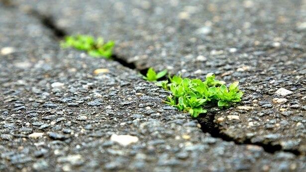 Un ciuffetto d'erba cresciuto tra i rovi