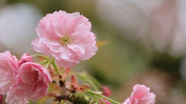 la fiducia dei cristiani e' come i fiori