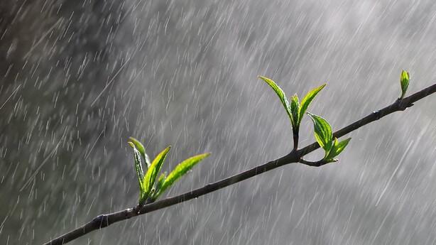 la pioggia grande