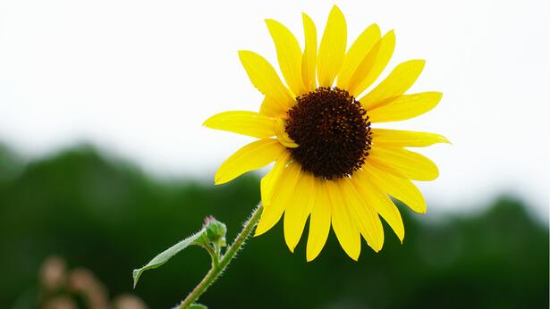 un fiore bellissimo