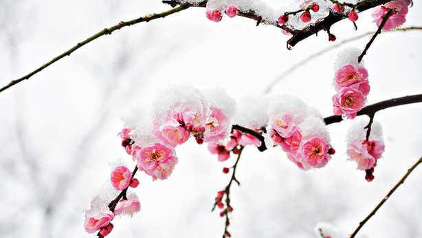 4. Страдания источают аромат любви