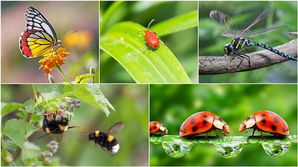 神创造各种昆虫