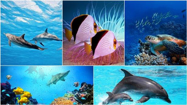 神创造了各种鱼类