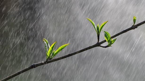 风雨中成长