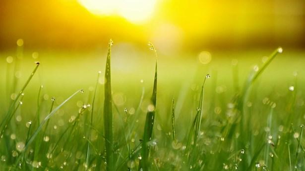 日出的草地